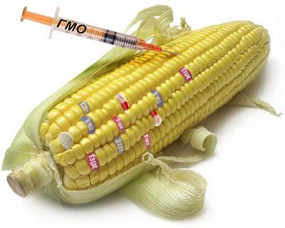 Ирина Ермакова: «ГМО можно использовать как биологическое оружие»