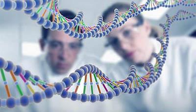 Человек способен перенять ДНК модифицированных культур
