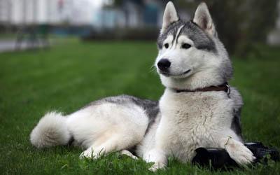 8 советов для экологически сознательных владельцев собак (ч.1/3)