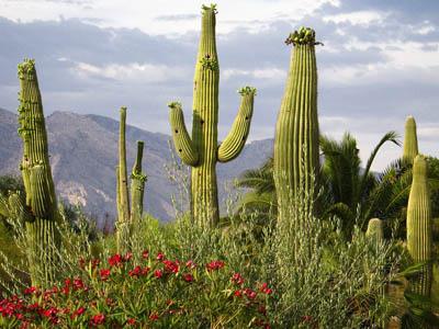 Экологическая технология очистки воды от нефти, позаимствованная у кактусов