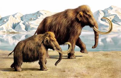 Когда на самом деле вымерли мамонты? (видео)