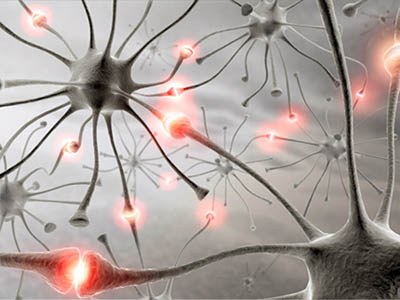 Оказывается, нервные клетки восстанавливаются