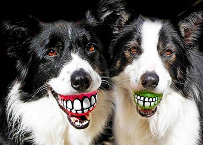 8 советов для экологически сознательных владельцев собак (ч.2/3)
