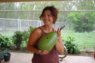 Гуанабана или плод дерева гравиола – растение-антиканцероген, в 10 тыс. раз эфективнее химиотерапии