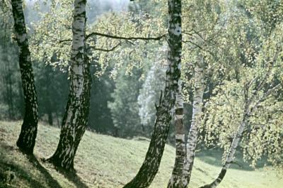 В Московской области создадут национальный парк
