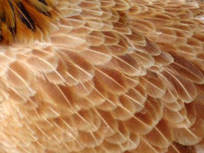 Экологичная пластмасса из куриных перьев