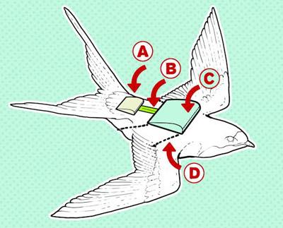 механизм получения энергии птицы