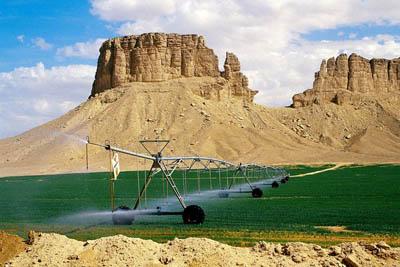 Японские ученые разработали технологию для озеленения пустынь