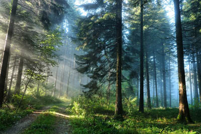 Аромат соснового леса противостоит изменению климата