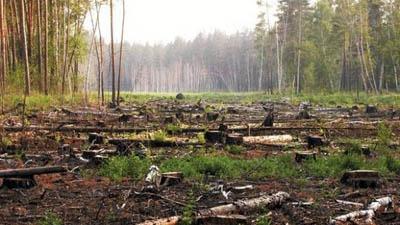 вырубка ленточных боров в Алтайском крае