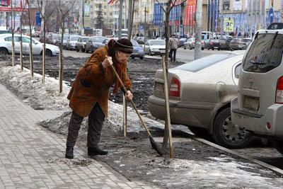 Воронежцы выступили за мораторий на рубку деревьев