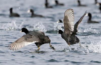 запрет охоты на птиц