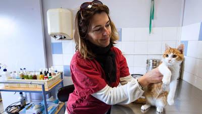 Животные могут стать донорами органов для людей