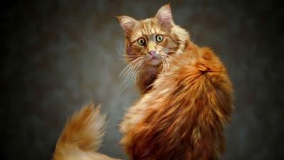 Кошки еще более опасны для экологии, чем люди
