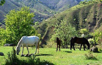 Россия намерена заниматься развитием экотуризма в Крыму