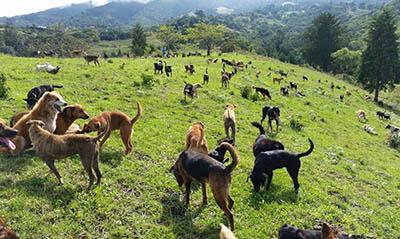 Land of the Strays в Коста-Рике – приют для тысячи бездомных собак