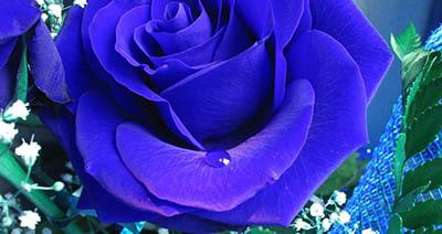 Цветы – подарок для прекрасного настроения