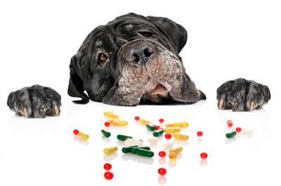 Витамины и минералы для домашних животных