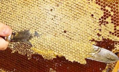 Польза продуктов пчеловодства: забрус и прополис (ч.1/3)
