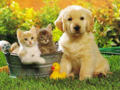 Средства защиты для домашних животных