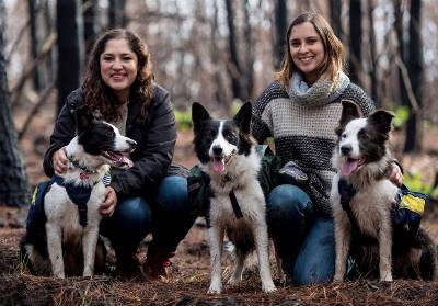 Собаки помогают в восстановлении лесов после пожара