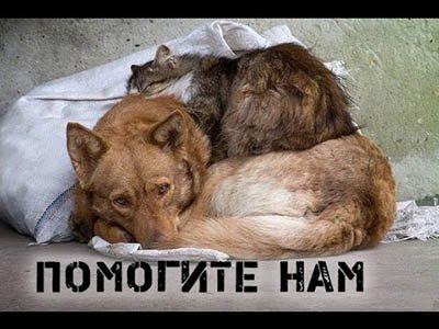 Найденные животные - Lostpets.com.ua